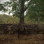 Root causes Tree